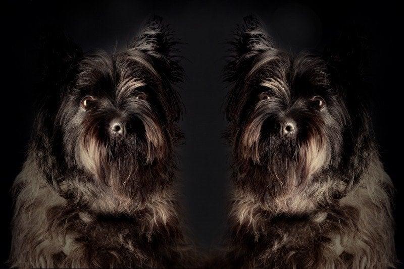 競合の例:二頭の犬